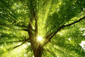 Sunlight through Tree